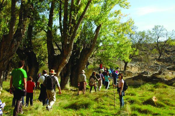 Las choperas del Morenillo, entre Blesa y Huesa