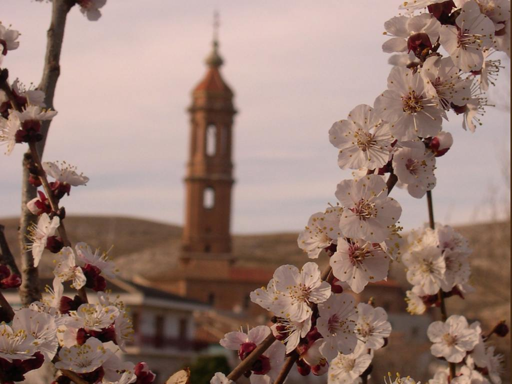 Almendro en flor y la torre de Blesa al fondo